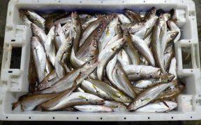 grimsby-suspends-fish-auction