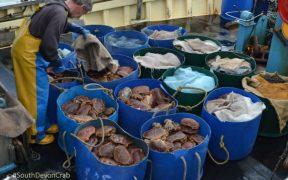 impact-of-coronavirus-on-fishing