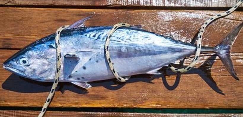 FAIRTRADE TUNA FISHERY