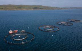 mowi-trials-new-sea-lice