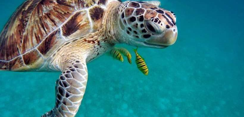 CAMPAIGN CALLING FOR TURTLE EXCLUDER