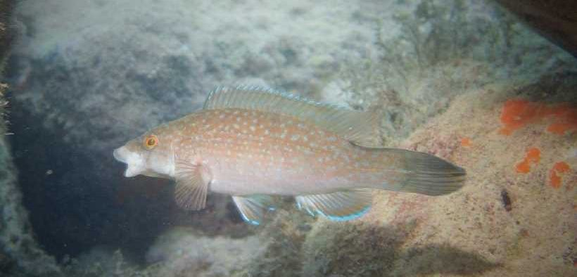 FISH CAN PASS POLLUTANT CHEMICALS