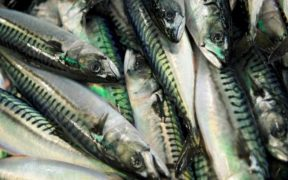 NORWEGIAN SEAFOOD EXPORTS FALL