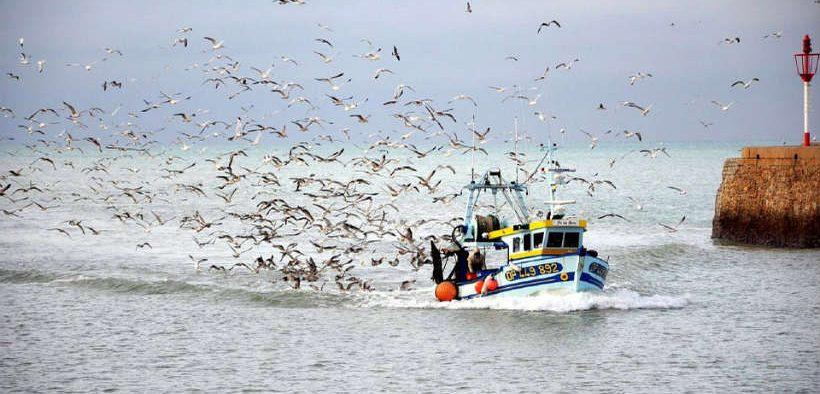 majority-of-fish-consumed
