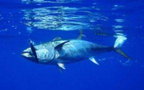 EU EXTENDS FISHERIES PROTOCOL