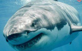 FOS-honours-shark-day
