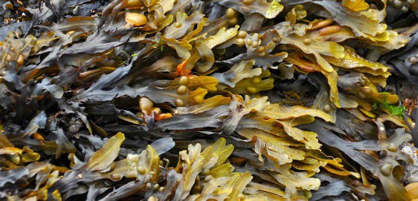 boost-for-tanzanian-seaweed-farmers