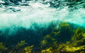 SEAWEED AS AN EFFECTIVE IMMUNOTHERAPY