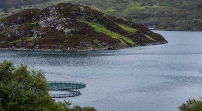 Wider Economic Impacts of Aquaculture