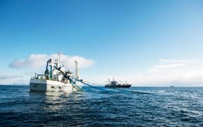 Norwegian seafood exports remain ahead of over last year despite a decline in September