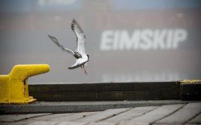 Samherji increases shareholding in Eimskip