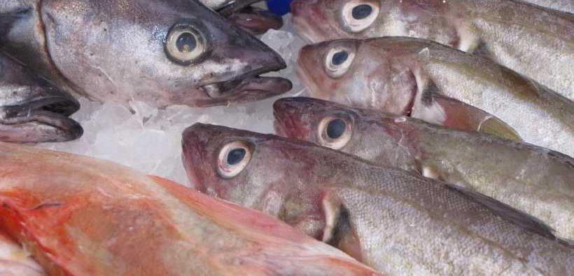 TOP DUTCH FISH PROCESSOR