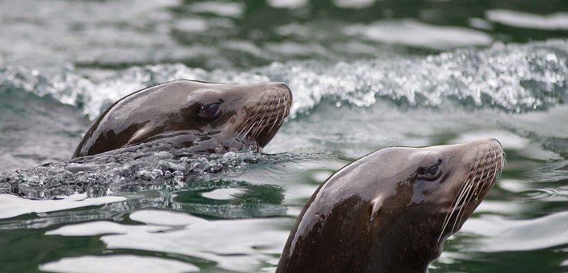 Tristan da Cunha creates huge marine reserve
