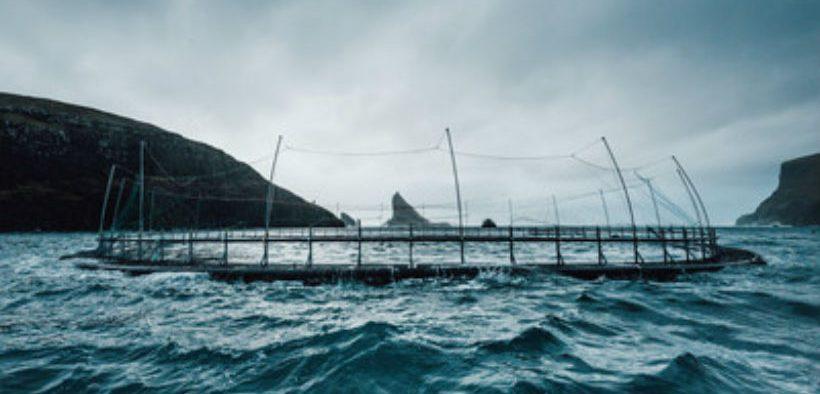 atlantic-salmon-farmer-hiddenfjord