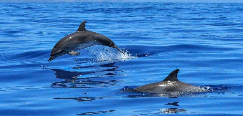 marine-mammal-mapping-in-southern-hemisphere-to-aid-conservation