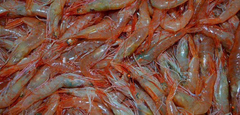 shrimp-trading-made-easy