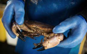 sustainability-leadership-for-uk-shellfish
