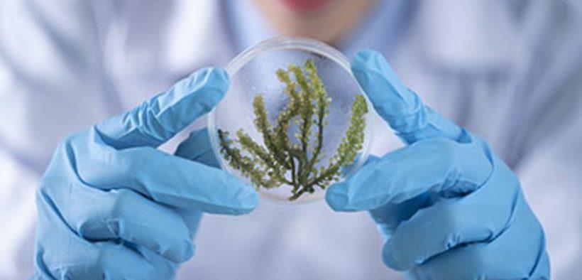 consultation-on-promoting-eu-algae