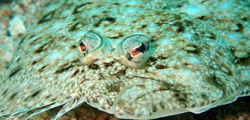dates-announced-for-groundfish-season