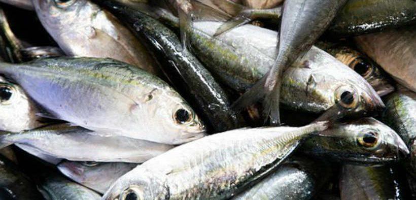 global-tuna-catch-report