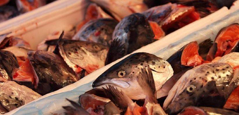 marintrust-unveils-new-verification-tool-for-fishmeal-plants