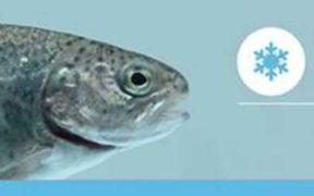 ALLER AQUA FIRST FISH FEED