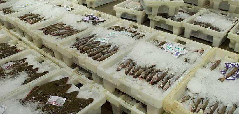 SEAFOOD EXPORT DELAYS
