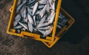 VITAL THAT UK FISH EXPORTERS