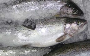 £23 MILLION SEAFOOD DISRUPTION