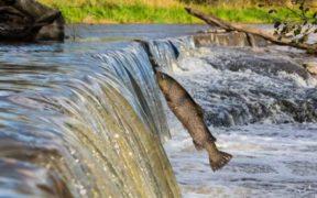 ONE THIRD OF FRESHWATER FISH (1)