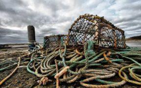 scottish-seafood-scheme-launches