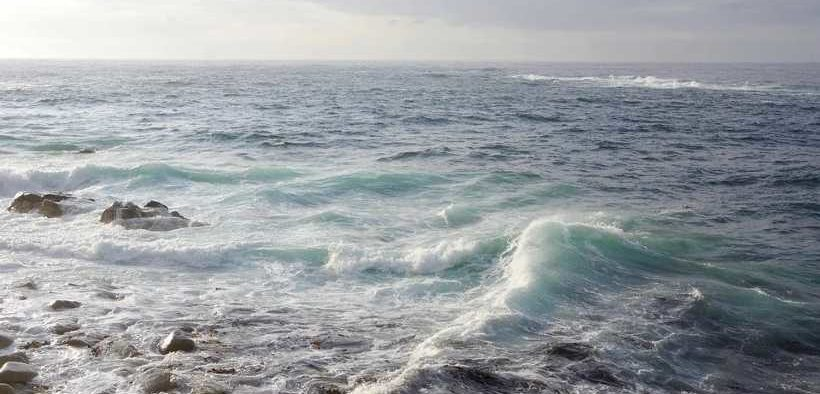 studland-bay-marine-conservation-zone