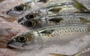 CALL FOR IMPROVED EU SEAFOOD TRACEABILITY