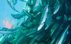 CARGILL PARTNERS WITH FISH FARMERS