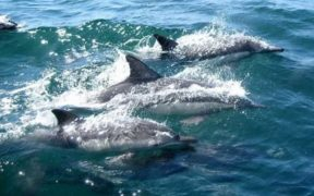 DOLPHIN SAFE GROUP ACCUSES SEASPIRACY