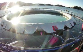 NEKKAR STARTS OCEAN TESTING