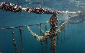 NEW ACTION PLAN WILL BOOST ORGANIC AQUACULTURE