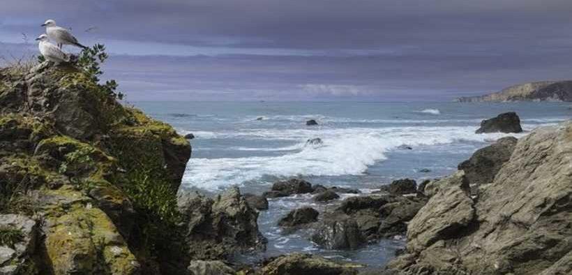 NZ FISHING COMPANY FINED