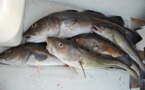 OUTCOME OF TRILATERAL FISH NEGOTIATIONS