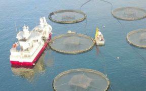 qualifications-for-aquaculture-management