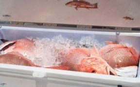 seafood-fraud-a-global-concern