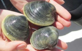 HOW MUCH IS A CLAM WORTH
