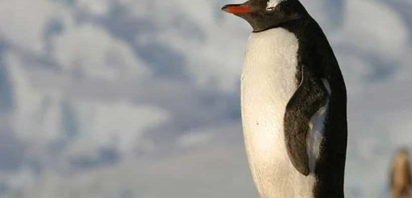 NEW MARINE PROTECTED AREAS IN ANTARCTICA
