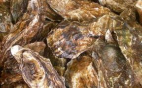 NEW ZEALAND OYSTER CONTROL MEASURES