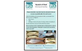SW FISHERIES AUTHORITY ISSUE SHAD BYCATCH