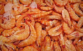 British Columbia prawn fishers permitted to freeze their catch