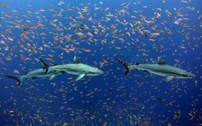 CALLS FOR G7 TO PRIORITISE OCEAN HEALTH