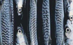 EU PELAGIC FISHERS SLAM NORWEGIAN MACKEREL