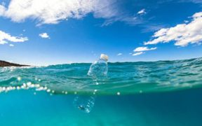 FISH HAVE BEEN SWALLOWING MICROPLASTICS