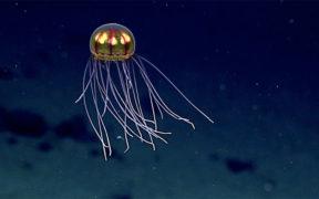 PROTECT DEEP-SEA BIODIVERSITY HOTSPOTS